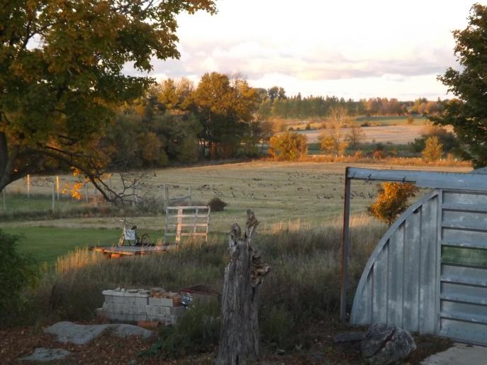 farm 10-10-14 003